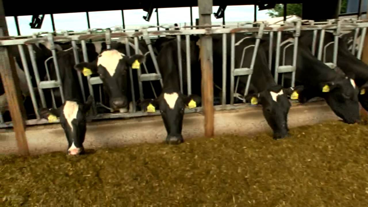 Dairy Farming Products Dairy Farming Documentary