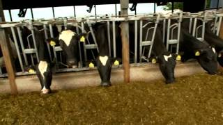 Dairy Farming Documentary