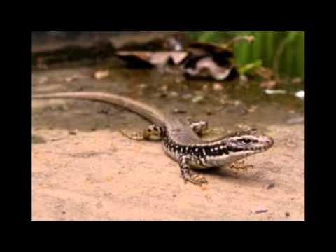 Reptiles Pets Australia Top 10 Aussie Reptile Pets
