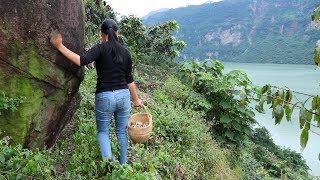 農村姑娘懸崖峭壁上開荒種地,采集食材制作中國四川泡菜,下飯太好吃啦 Girls cultivate fields and make pickles on the edge of cliffs
