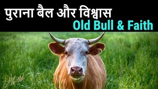 Old Bull & Faith , Purana Bail aur Viswas
