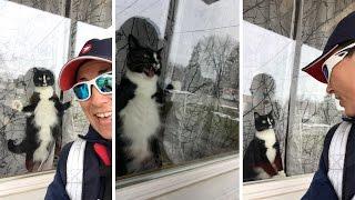 Cat Attacks Window Whenever It Spots Postwoman
