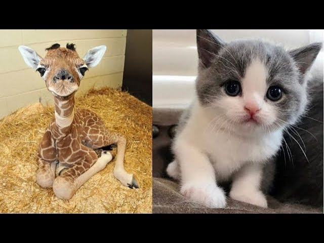 Cute baby animals Videos Compilation cute moment of the animals - Soo Cute! 23