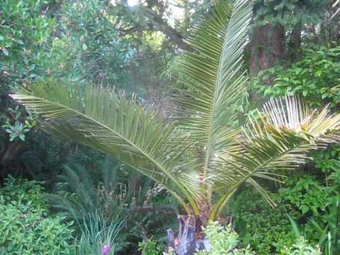 Ganges Salt Spring Island Chilean Wine Palm