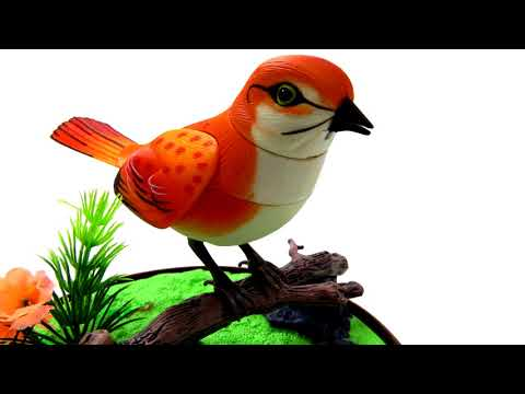 Bird Sound Ringtone Free Mp3 Ringtones Downloads