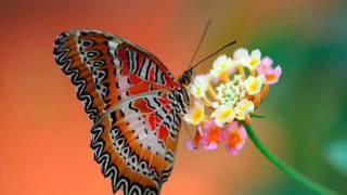 Watch Andre Rieu Memories video