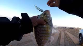 Trip To Pismo State Park Beach Fun Fishing...