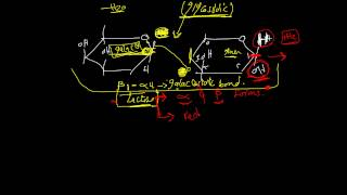Carbohydrate chemistry lec.5 DR. Mahmoud Ettaweel (Disaccharides)