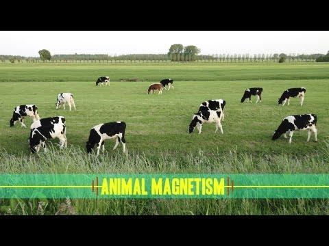 Animal Magnetism: How Animals Navigate