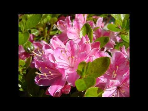 Skaldowie - Wiosna
