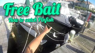 Fishing Tip: How to Catch Pinfish Tips & Tricks