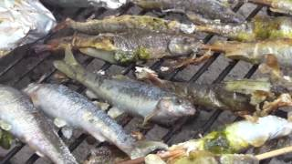 Kast Netting for minnow(hmong language) (bitter fish eating )- OOW Outdoors