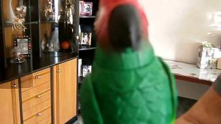 Parrots over Christmas