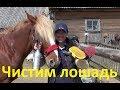 Чистка лошади mp3
