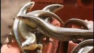 chia sẻ mô hình nuôi rắn mối thành công