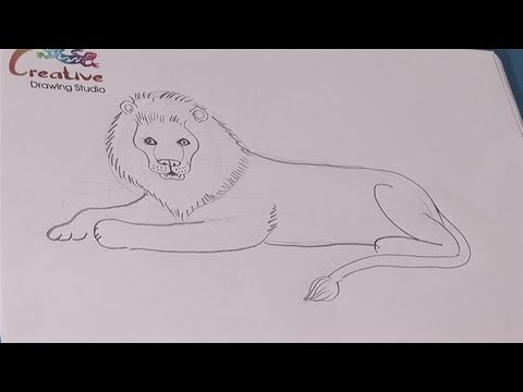How To Learn To Draw A Lion Youtube