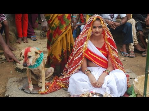 Woman Marries Dog In Traditional Ceremony In India video