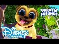 Welpen Freunde - Titelsong: Karaoke Version | Disney Junior 🐶
