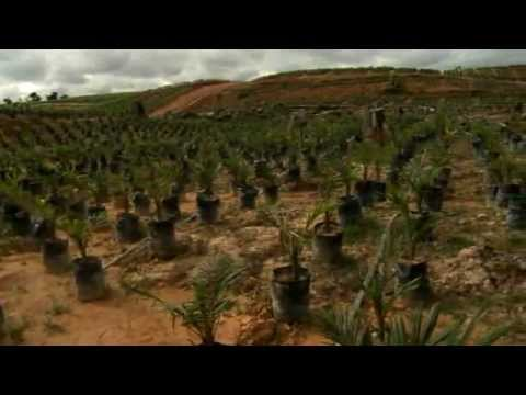 Oil Palm BMP - Nursery Stage