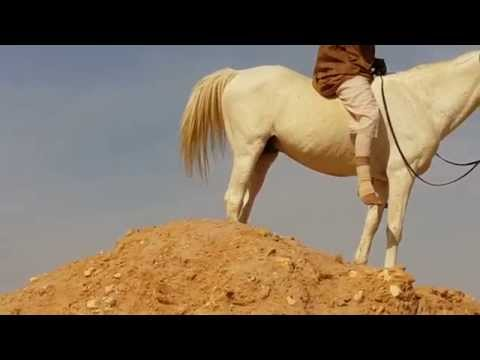 Riding Horses(Arabian Riding 737)Horses Nature