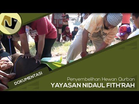 Dokumentasi Penyembelihan Hewan Qurban YAYASAN NIDA'UL FITHRAH