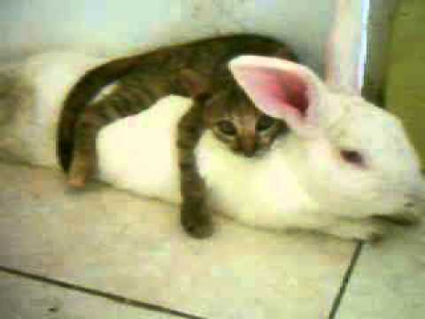 Do Cats And Bunnies Get Along