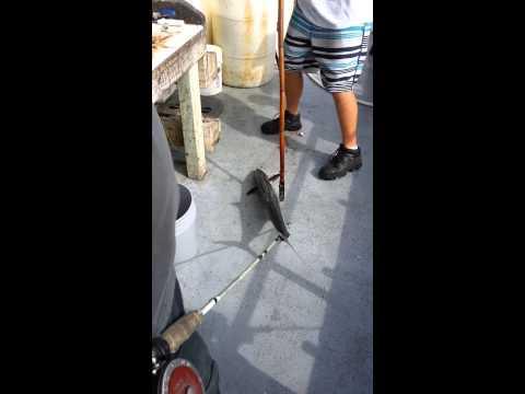 Good fishing in Port Arkansas
