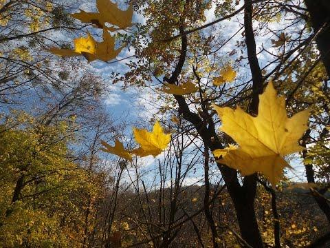 листопад осенний фото