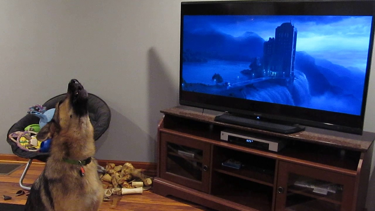 German Shepherd Goes Full Zootopia