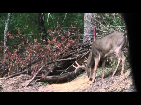 Janas 1st deer