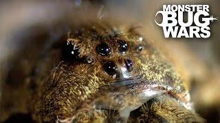 Mangrove Tree Crab vs Leopard Wandering Spider | MONSTER BUG WARS