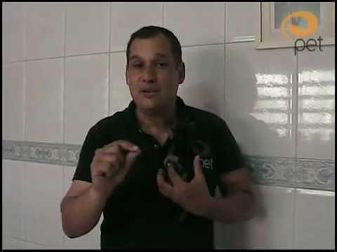 Video Aula: Banheiro no lugar certo