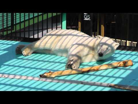 2011年5月26日 おびひろ動物園 寝起きの悪いイコロ