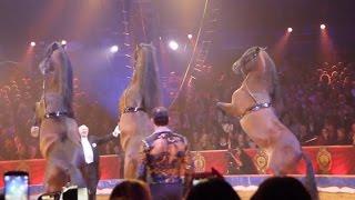 Flavio Togni - 40th Circus Festival of Monte Carlo 2016 - Golden Show