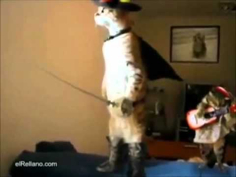 Gatos chistosos y asombrosos