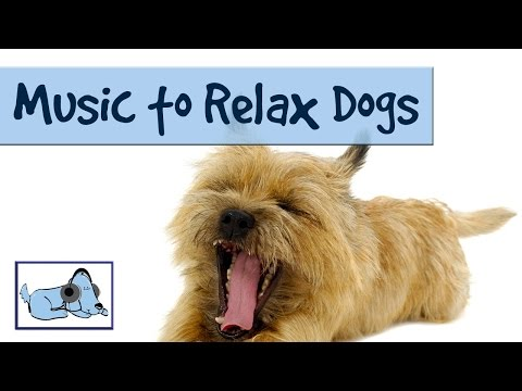 MUSIC TO RELAX DOGS! - TRY IT ON YOUR DOG AND WATCH
