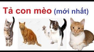 Tả con mèo nhà em - Tả một con vật nuôi trong nhà - Tả một con vật mà em yêu thích