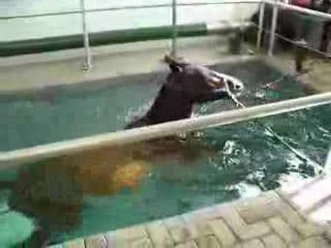Horse swimming in pool youtube for Negative show pool horse racing