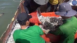 Bao lưới được bầy cá trên tấn ở Kiên Giang -phần 2/fishing