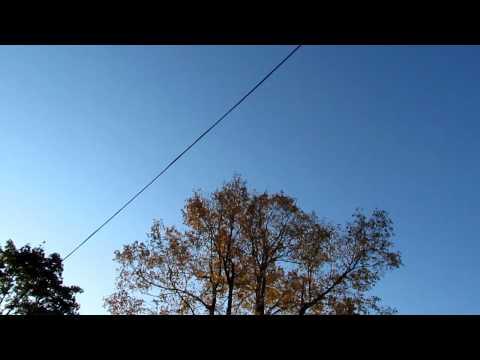 Hermit Thrush giving nocturnal flight call from groun-Gardiner-ME-Oct10-2011.MOV