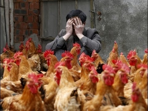 Dreadful BIRD FLU (H5N2) OUTBREAK!! In CHINA 12.24.13