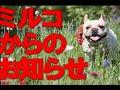 MIRCO(ミルコ) ~マオとボクと、時々、キイちゃん~ 2012年12月27日発売