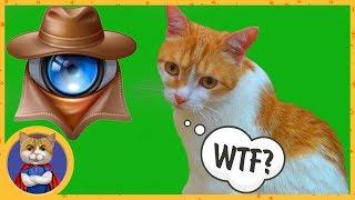 Чудо - девайс для слежки за вашим котом! [Распаковка посылок]