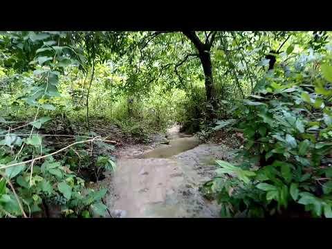Download Pesona sungai di hutan gunung kendil