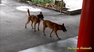 Dog Mating More Times Aggressive