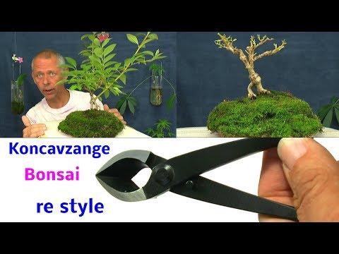 Bonsai Projekt Rückgestaltung re styling