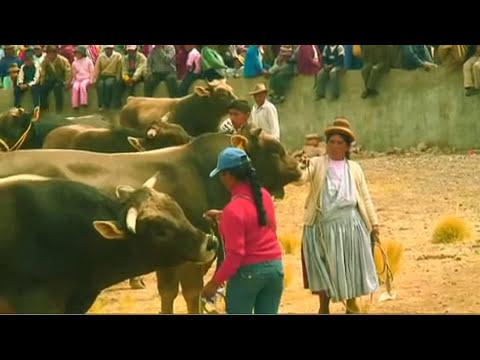 Engorde y Comercializacion de Ganado Vacuno Carne