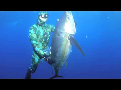 Spear Fishing for Yellowfin Tuna - HookBuzz.com