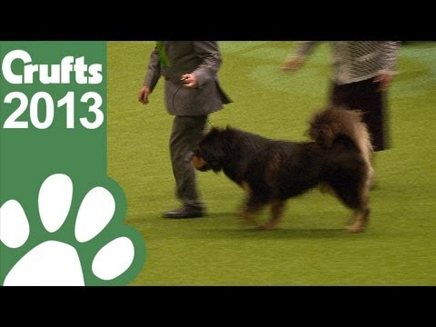 Group Judging (Working) and Presentation - Crufts 2013