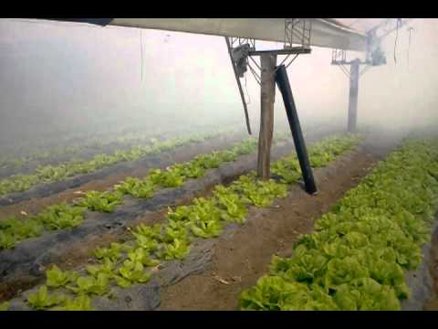 video de PULS FOG en Horticultura3